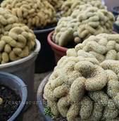 Cactus Curitiba
