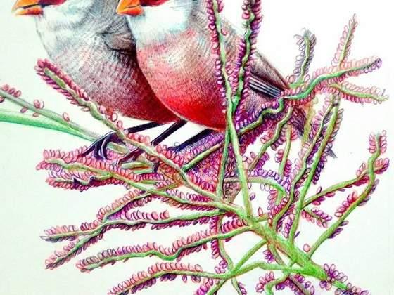 Exposição BIRds