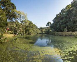 Parque da Barreirinha: oásis esquecido e pouco aproveitado no meio de Curitiba