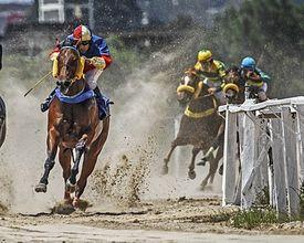 Turfe: quinta-feira (17)  é dia de corridas no hipódromo do Tarumã