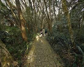 10 passeios diferentões em Curitiba sem gastar nada