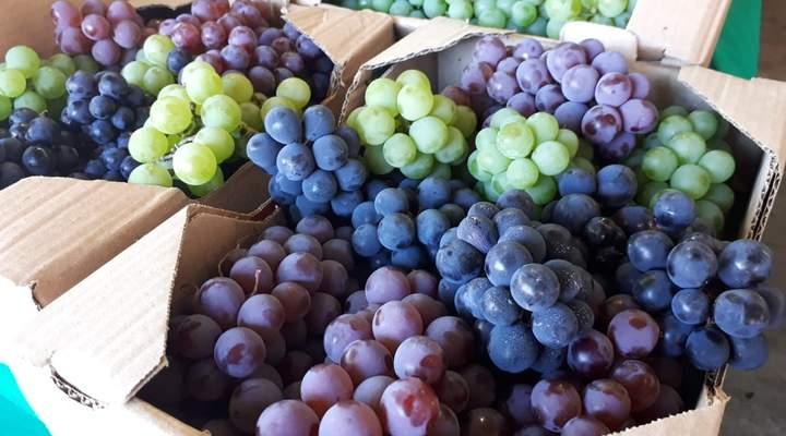 61ª Festa da Uva de Santa Felicidade oferece o melhor da culinária italiana tradicional