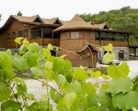 Bons vinhos e belos lugares: vinícolas próximas a Curitiba para passar o dia
