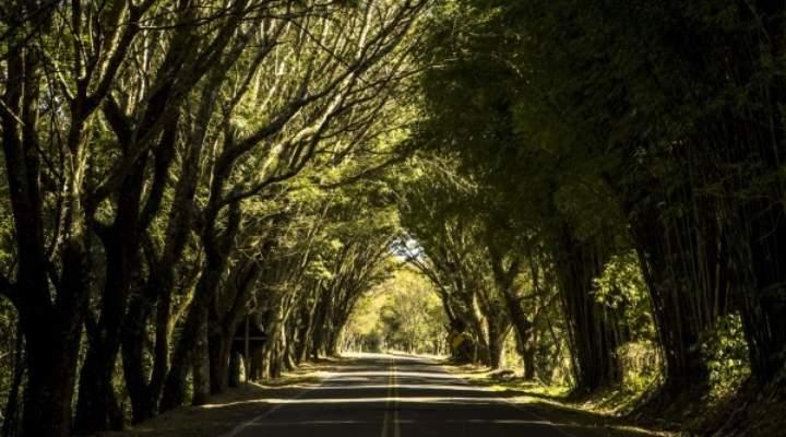 10 lugares perto de Curitiba que valem uma sessão de fotos
