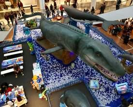 Exposição em shopping mostra as curiosidades do mundo marinho