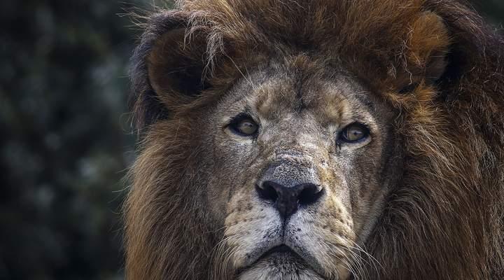 Zoológico de Curitiba ganha mais uma hora de funcionamento durante o verão