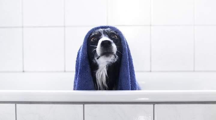 14 lugares para levar seu cão/gato tomar banho com desconto do Clube Gazeta do Povo