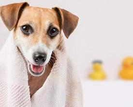 No mês de outubro, veja como economizar em acessórios para seu pet